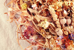Autumn herbs. Royalty Free Stock Images
