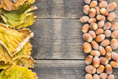 Hazelnuts and dry leaves in a rustic, wooden background. Autumn is here. Dry leaves and ripe fruits are coming. Hazelnuts and dry leaves on a rustic, wooden Stock Photos