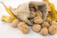 Nuts and dry leaves in a rustic bag on a white background. Autumn is here. Dry leaves and ripe fruits are coming. Walnuts and dry leaves in a rustic bag on a Stock Photos