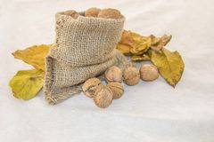 Walnuts  and dry leaves in a rustic bag on a white background. Autumn is here. Dry leaves and ripe fruits are coming. Walnuts  and dry leaves in a rustic bag on Stock Photo