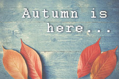 Autumn is here... written on blue, grunge, wooden background wit Stock Image