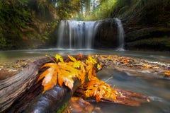 Autumn at Hidden Falls Stock Photos
