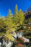 Autumn high mountain lanscape Stock Image