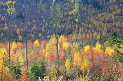 Autumn at High Tatras mountains, Slovakia Royalty Free Stock Photos