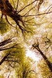 Autumn Highlights y toldo de árbol abstractos de las siluetas - 4 fotos de archivo libres de regalías