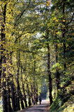 Autumn hike at the Elbe river in Germany Stock Photography
