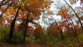 Autumn Hike. A hike through the forest on an overcast day in Missouri stock footage