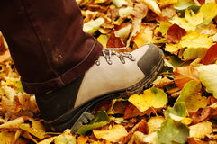Autumn hiking. Heavy hiking shoe walking on fallen leaves Royalty Free Stock Photos