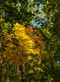 Autumn Hiking at Pilot Mountain State Park royalty free stock photo
