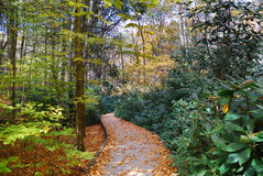 Autumn hiking trail. With foliage in woods. From Bushkill Falls, Pennsylvania stock images