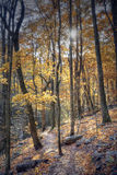 Autumn hiking trail Stock Photos
