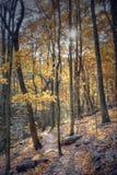 Autumn hiking trail. Beautiful hiking trail winding through a mountain during autumn Stock Photos
