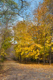 Autumn hiking trail. Autumn forest with yellow maple trees and colorful foliage in hiking trail, Toronto Royalty Free Stock Photo