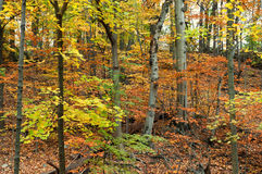 Autumn hiking trail Royalty Free Stock Photography
