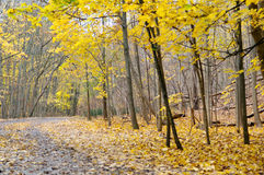 Autumn hiking trail. Autumn forest with yellow maple trees and colorful foliage in hiking trail, Toronto Stock Photos