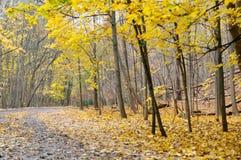 Autumn hiking trail Stock Photos