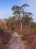 Autumn Hiking Trail Pennsylvania Royalty Free Stock Photography