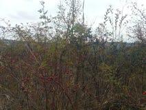 Autumn hill Stock Image