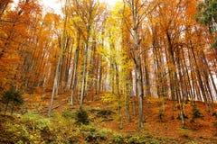 Autumn hill landscape Stock Photo