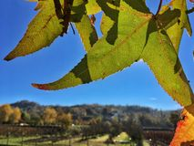Autumn on the hill of Saluzzo Royalty Free Stock Image