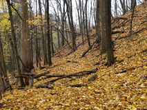 Autumn hill, Toronto, Ontario, Canada. Leaves trees leaf fall tree autumn ground cold forest hill slope hike nature season seasons colour yellow color Royalty Free Stock Images