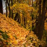 Autumn hillisde Stock Image