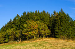 Autumn in the hills Royalty Free Stock Image