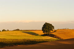 Autumn hills at sunrise. Autumn landscape with ploughed filed and Stock Photo
