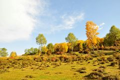 Autumn Hillside imagens de stock royalty free
