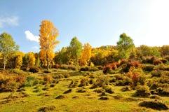 Autumn Hillside imagens de stock