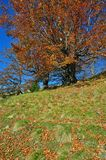 Autumn on a hillside. Stock Images