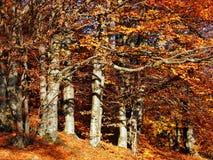 Autumn on a hillside Stock Photos