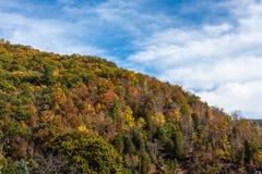 Autumn Hillside fotos de stock