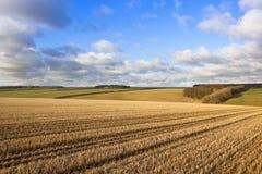 Autumn Hillside fotografia de stock royalty free