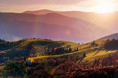 Autumn hillside with red and yellow forest Stock Images