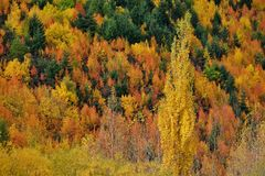 Autumn hillside in Arrow Town, New Royalty Free Stock Images