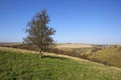 Autumn hillsides Stock Photography