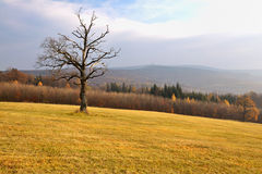 Autumn hilly landscape with dead tree. View on an quiet autumn landscape with cut meadow and dead tree Royalty Free Stock Image