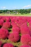 Autumn in Hitachi Seaside Park Stock Image