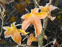 Autumn hoarfrost Stock Photography