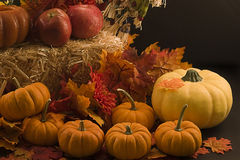 Autumn Holiday Stock Image