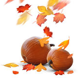 Autumn holidays scene of ripe pumpkins and leaves. Fat pumpkins ready for Halloween and Thanksgiving holiday festivities royalty free stock photography