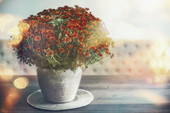 Autumn home decoration with vase and flowers on table , sunlight Royalty Free Stock Photography
