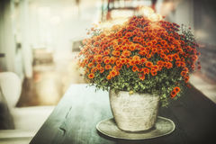 Autumn home flowers decoration in vase on table Royalty Free Stock Image