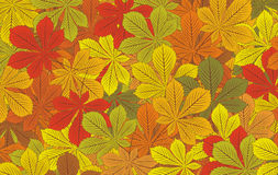 Autumn horse-chestnut leaves vector background Stock Image