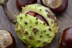 Autumn Horse Chestnut Seed Conkers foto de stock royalty free