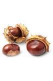 Autumn horse chestnuts Stock Photos