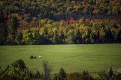 Autumn Horses Imagem de Stock Royalty Free