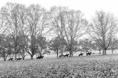Autumn Horses Riders Landscape Imagen de archivo