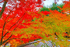 Autumn hue leaves with the japanese statue in Kyoto, Japan Royalty Free Stock Photos